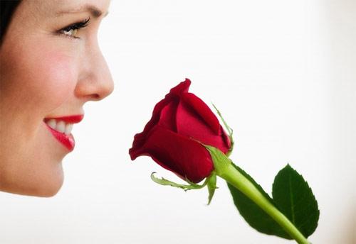Tự chiết xuất tinh dầu hoa hồng, Làm đẹp, lam dep tu hoa hong, lam dep, lam dep da, cham soc da, duong da