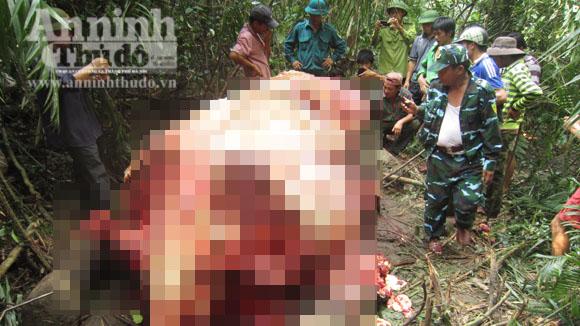 Nóng từ địa phương ngày 4/4: Quảng Bình - Truy tìm thủ phạm giết và xẻ thịt voi rừng
