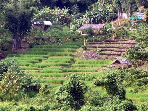 15 kiệt tác ruộng bậc thang trên thế giới