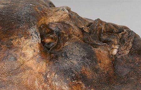 Hình ảnh Lời nguyền kinh hoàng của xác chết 5.300 tuổi số 6