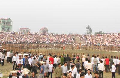 Tưng bừng lễ hội Chọi trâu cổ nhất Việt Nam 1