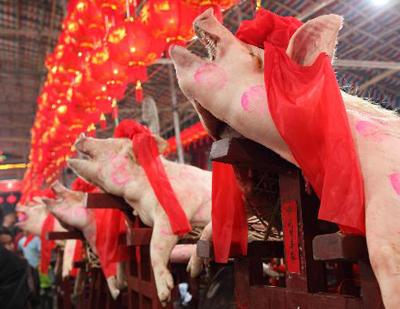 Hình ảnh Lợn đẹp đua tài ở... lò mổ số 4