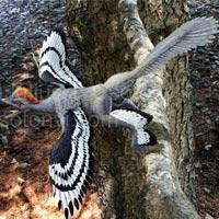 Hình ảnh Hé lộ hình ảnh độc của... chim 4 cánh số 1