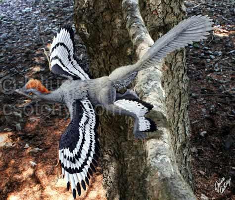 Hình ảnh Hé lộ hình ảnh độc của... chim 4 cánh số 4