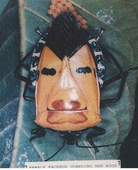 Quái dị những sinh vật có bộ mặt người, Phi thường - kỳ quặc,
