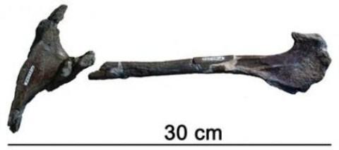 Hình ảnh Phát hiện khủng long bạo chúa ở Nam bán cầu số 2