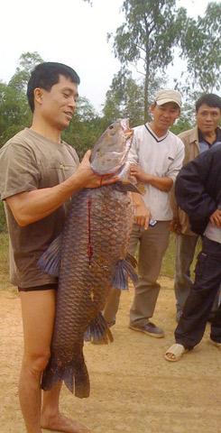 Hình ảnh Xem hành trình câu cá trắm nặng gần 30 cân số 9