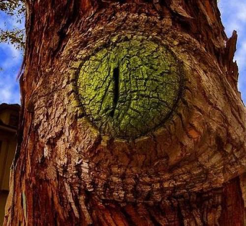 Hình ảnh Những cây có hình thù quái dị số 6