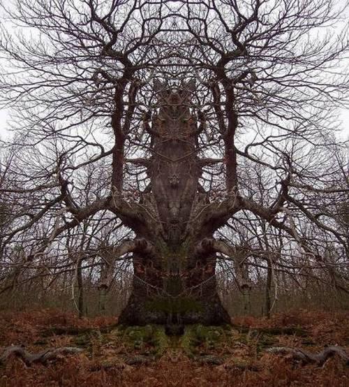 Hình ảnh Những cây có hình thù quái dị số 7