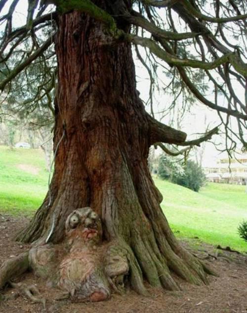 Hình ảnh Những cây có hình thù quái dị số 8