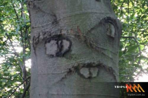 Hình ảnh Những cây có hình thù quái dị số 10