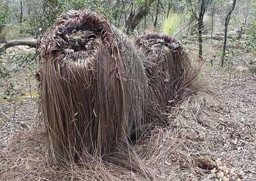 Hình ảnh Những cây có hình thù quái dị số 11