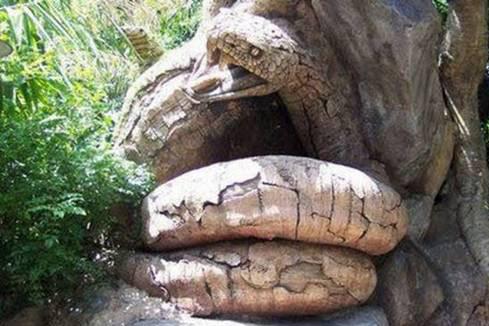 Hình ảnh Những cây có hình thù quái dị số 15