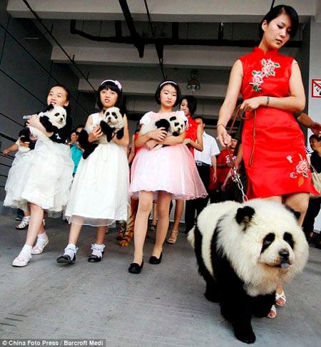 Đây là Hổ hay Gấu??? - www.TAICHINH2A.COM