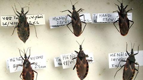Tránh bọ xít hút máu như thế nào? - www.TAICHINH2A.COM