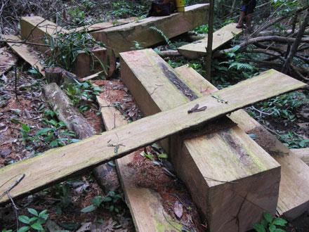 """Dân thảnh thơi đốn cây xẻ gỗ, kiểm lâm """"không nỡ bắt"""" 2_7_1289638276_48_IMG_2474"""