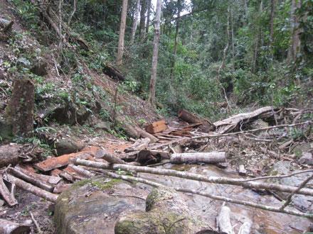 """Dân thảnh thơi đốn cây xẻ gỗ, kiểm lâm """"không nỡ bắt"""" 2_7_1289638276_74_2"""