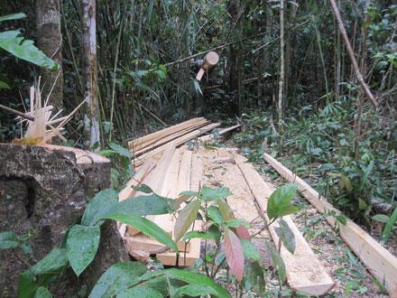 """Dân thảnh thơi đốn cây xẻ gỗ, kiểm lâm """"không nỡ bắt"""" 2_7_1289638277_01_5"""