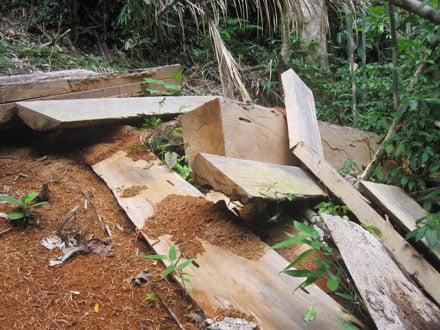 """Dân thảnh thơi đốn cây xẻ gỗ, kiểm lâm """"không nỡ bắt"""" 2_7_1289638277_26_7"""