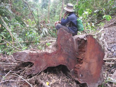 """Dân thảnh thơi đốn cây xẻ gỗ, kiểm lâm """"không nỡ bắt"""" 2_7_1289638277_78_17"""