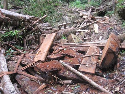 """Dân thảnh thơi đốn cây xẻ gỗ, kiểm lâm """"không nỡ bắt"""" 2_7_1289638277_91_18"""