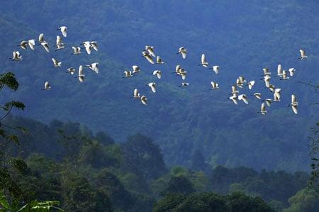 Cò bay rợp núi nơi thượng nguồn sông Hồng 2_7_1289981393_66_9999