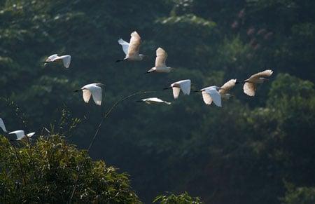 Cò bay rợp núi nơi thượng nguồn sông Hồng 2_7_1289981395_87_DSC_0129