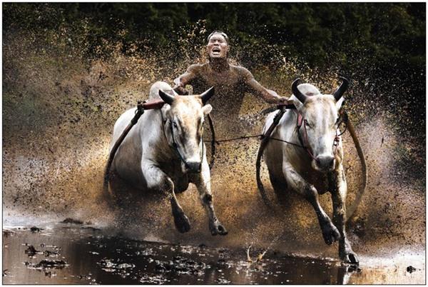 Hình ảnh Những hình ảnh tuyệt đẹp về tự nhiên và con người năm 2010 số 7