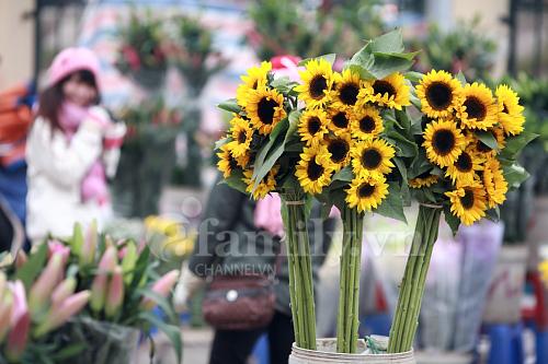 Hình ảnh Tấp nập chợ hoa ngày Tết số 2