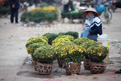 Hình ảnh Tấp nập chợ hoa ngày Tết số 14