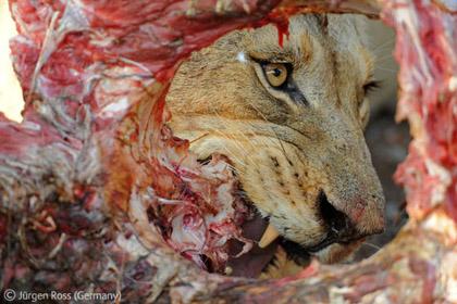 Hình ảnh Những bức ảnh tuyệt đẹp về thiên nhiên hoang dã số 5