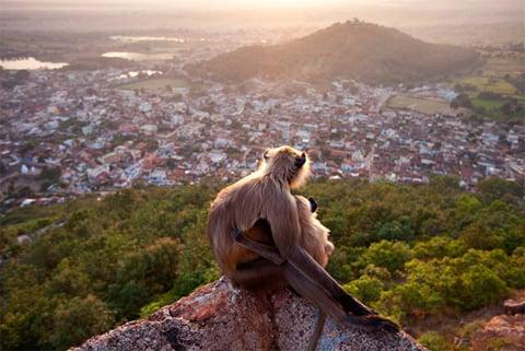 Hình ảnh Những bức ảnh tuyệt đẹp về thiên nhiên hoang dã số 8