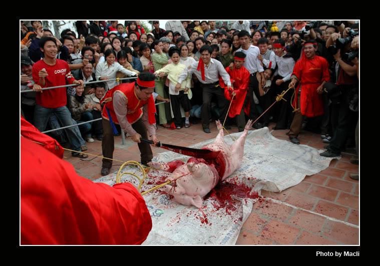 Hình ảnh Những lễ hội có hơi hướng bạo lực tại Việt Nam số 9
