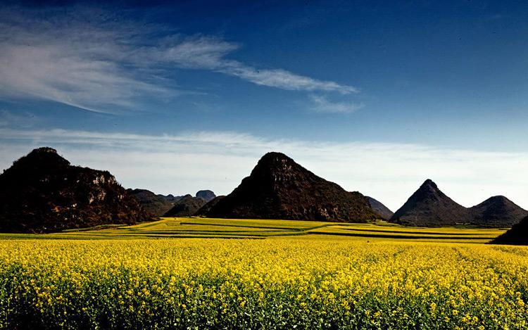 Cả thung lũng tràn ngập hoa.