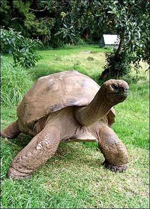 Hình ảnh Kỷ lục thế giới: Loài vật sống lâu nhất số 2