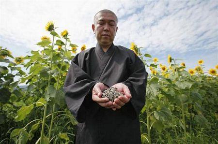 Hình ảnh Nhà sư Nhật trồng hướng dương để khử phóng xạ số 1