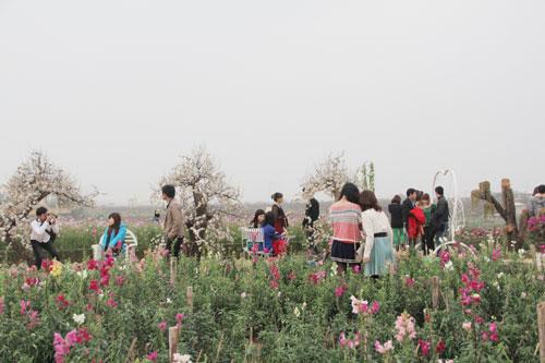Hình ảnh Vườn hoa Bách Nhật hút khách ngày xuân số 2