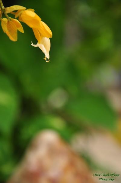 Hình ảnh Dây hoa chuỗi vàng số 1