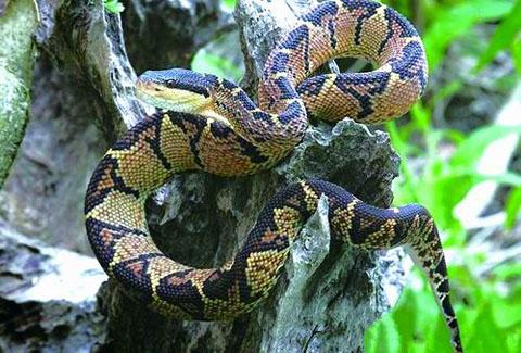 Hình ảnh 10 loài rắn độc nhất hành tinh số 9