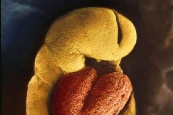 Hình ảnh Sự lớn lên kì diệu của bào thai trong bụng mẹ số 11