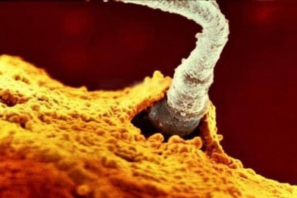 Hình ảnh Sự lớn lên kì diệu của bào thai trong bụng mẹ số 6