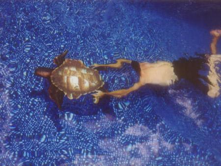 Ngoạn mục bể bơi 3D