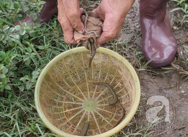 Người dân rủ nhau đi săn đỉa bán với giá khủng ở Hà Nội