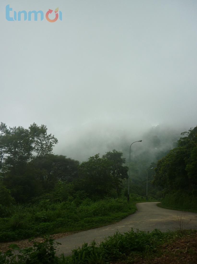 Đi Tam Đảo để hít hà hương thảo mộc 9