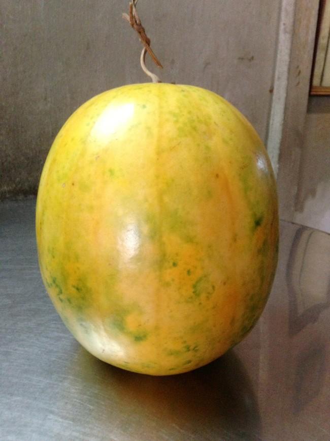 Trái dưa hấu để gần một năm vẫn tươi xanh 4