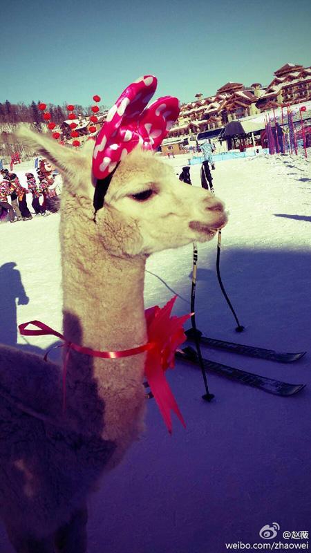 Triệu Vy khoe ảnh gia đình hạnh phúc đi trượt tuyết 9