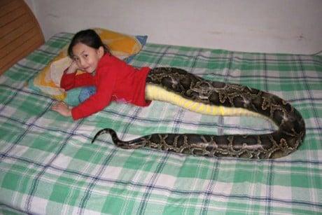Sự thật về cô bé nửa người, nửa rắn ở Thái Lan 5