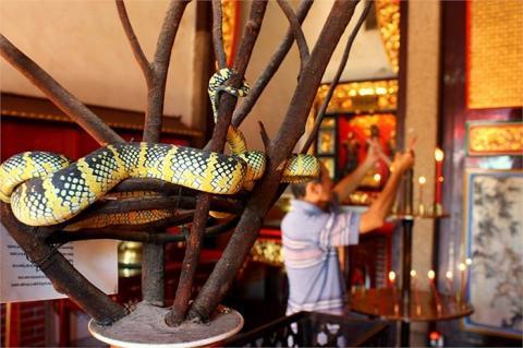 Cận cảnh ngôi đền linh thiêng toàn rắn độc duy nhất ở Đông Nam Á 8
