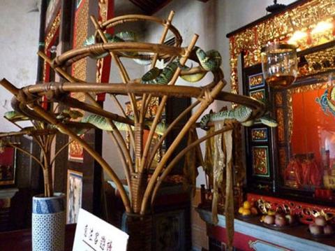 Cận cảnh ngôi đền linh thiêng toàn rắn độc duy nhất ở Đông Nam Á 6