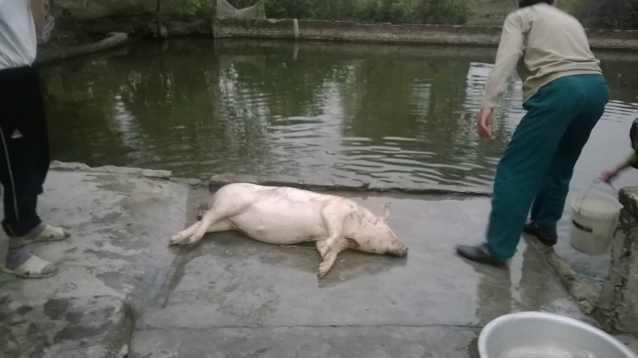 """""""Ăn đụng"""" lợn: Văn hóa vùng quê Bắc Bộ không bị mai một 7"""